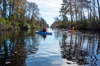 Dismal Swamp Canal Trail